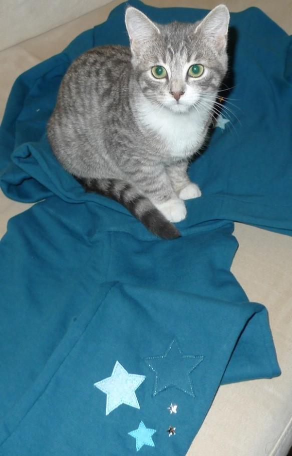 survet  chaton